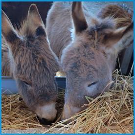 donkey-milk